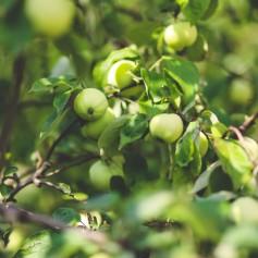 MANA Apfelwein zu Gast bei den Wilden Genüssen